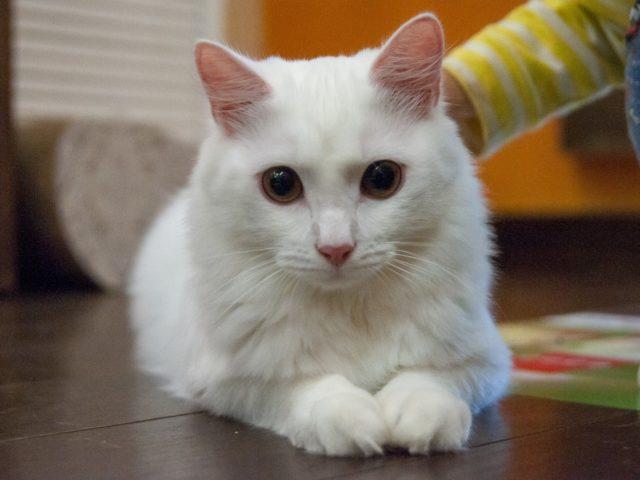 Про котиков и людей