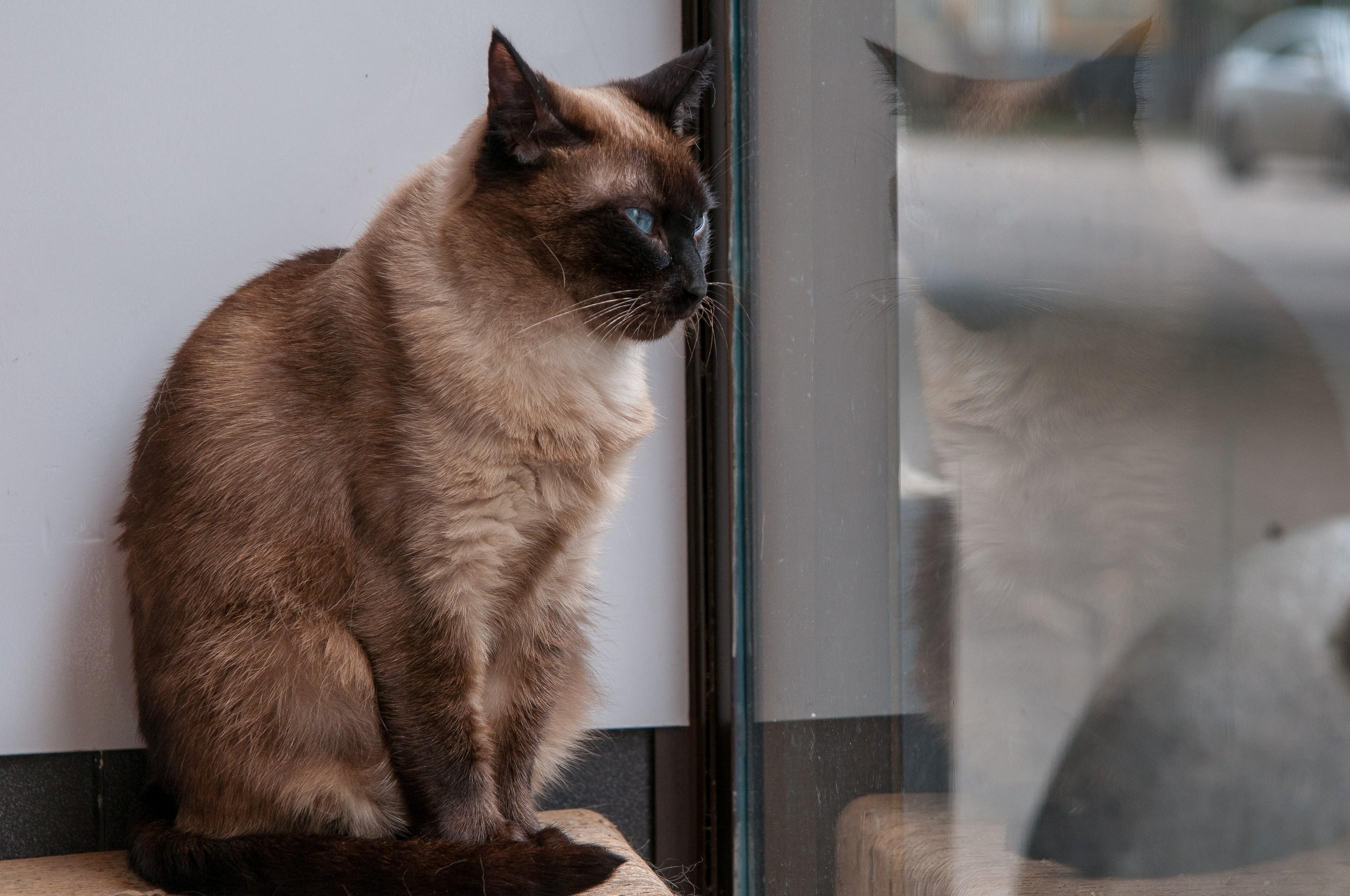 Кафе с кошками в Москве: Семь столичных котокафе, где можно снять стресс